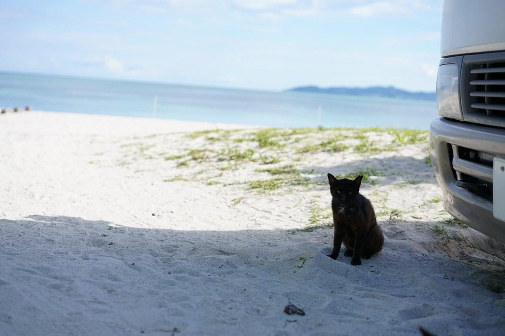 ビーチと猫_2