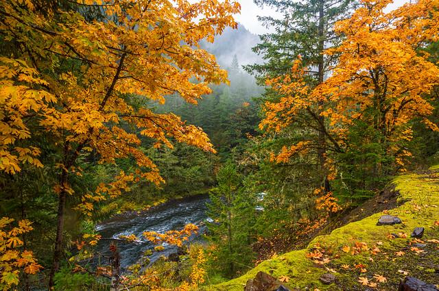 Clackamas River in Autumn