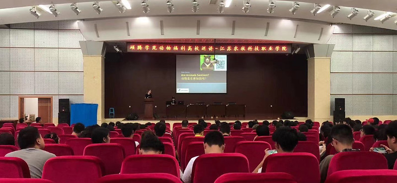 Pain management education by Animals Asia