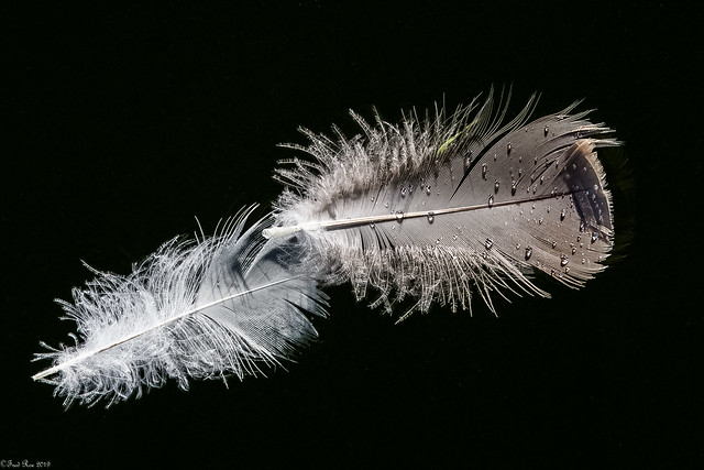 Still life with feathers and droplets