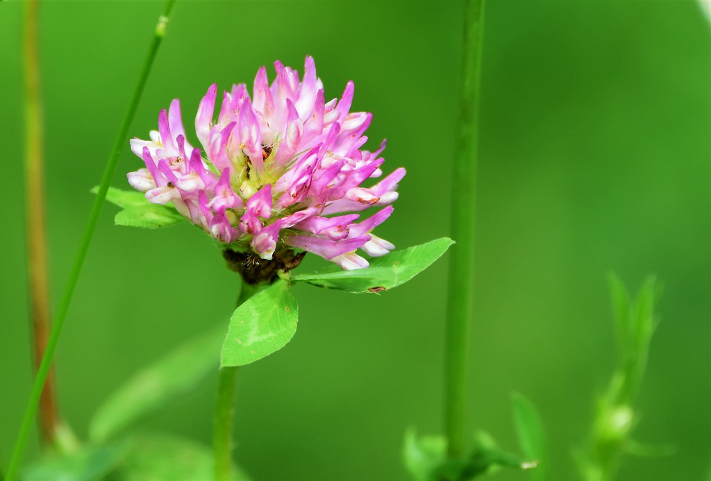 Pink and green beauty.
