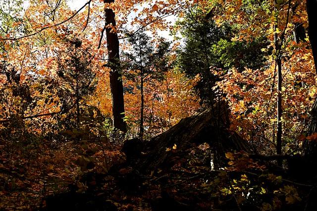 Autumn Color at Caesar Creek Lake