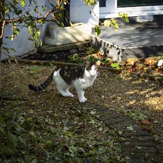 Cat, Park View, New Malden