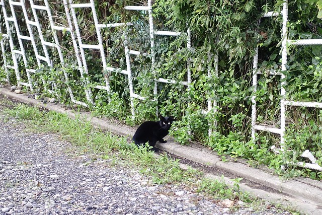 Today's Cat@2019-10-23