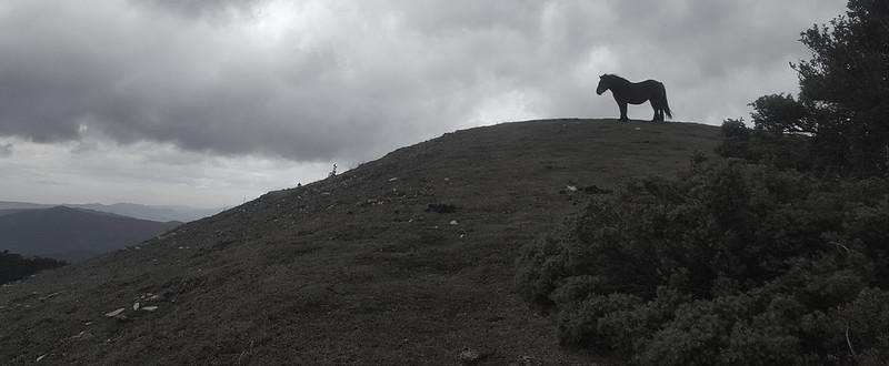 caballo en el monte