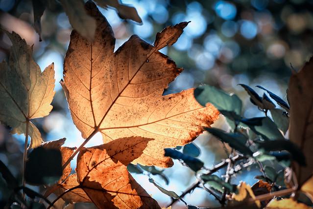 Buscando la luz de otoño. Caravaca de la Cruz.