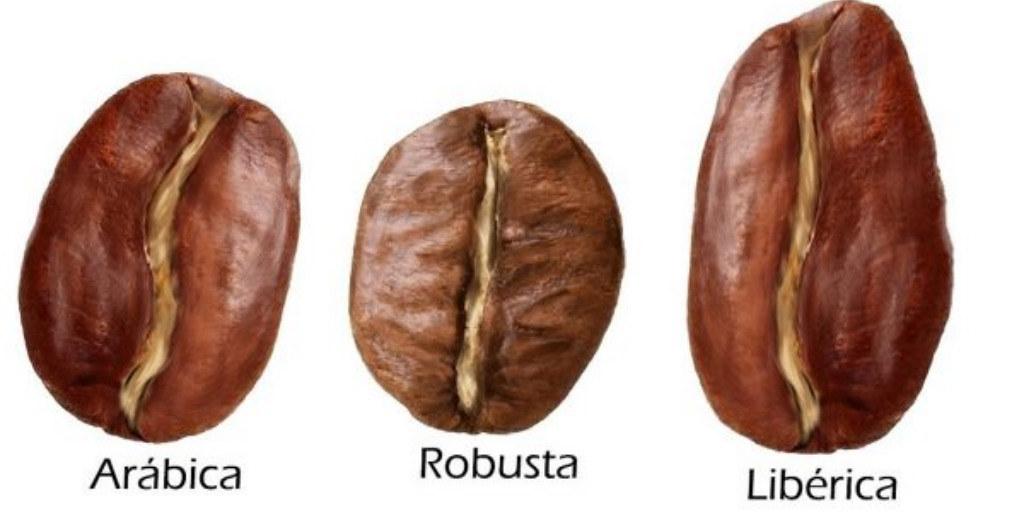arábica - robusta - liberica