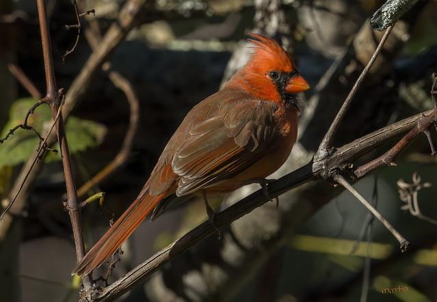 10 23's bird