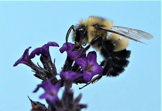 bee c canada