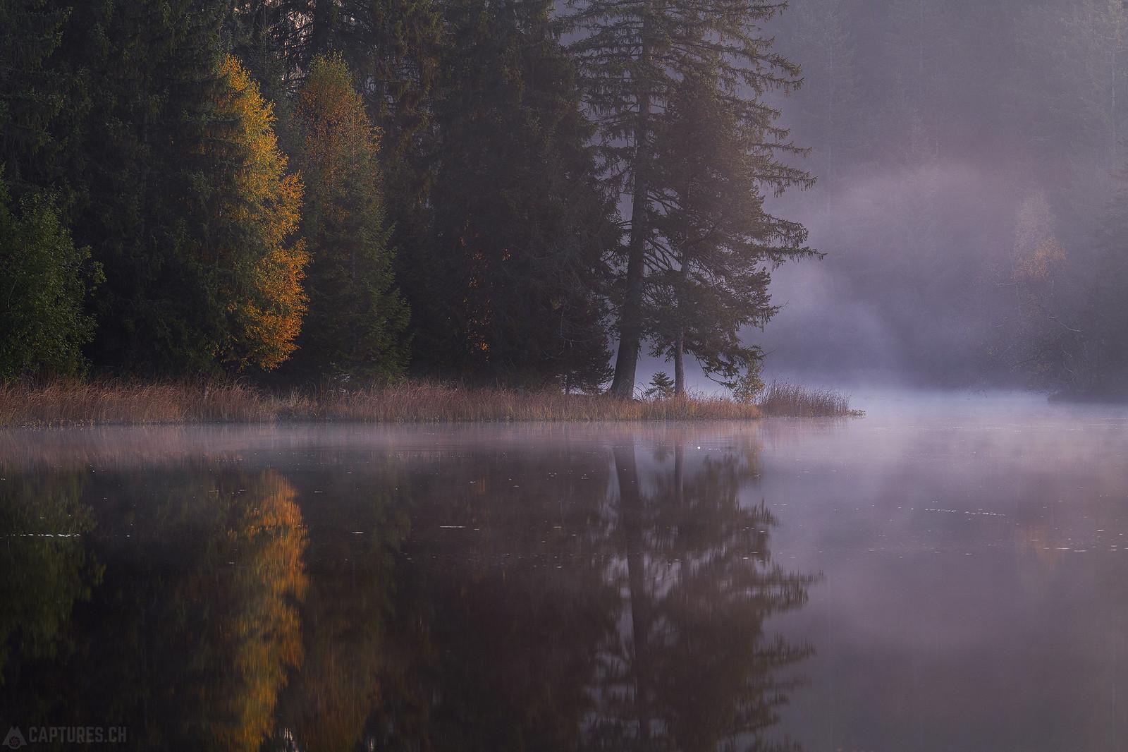 Morning fog - Étang de la Gruère