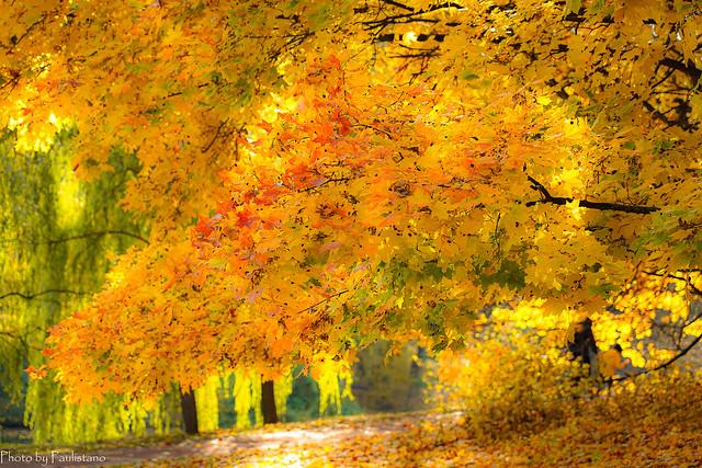 October gold... / Золото октября...