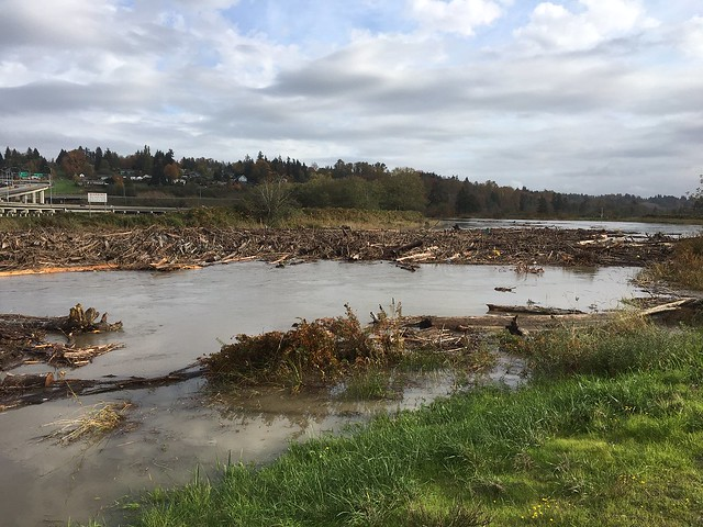 Logs and debris in the Ebey Slough