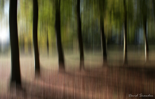 davidsnowdonphotography canoneos80d landscape trees mottisfont nationaltrust hampshire icm impression autumn treetrunks woodland