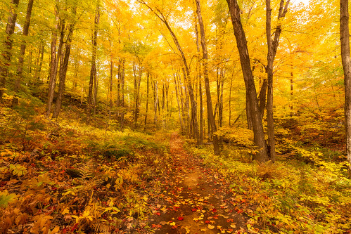 gatineau park quebec canada king mountain trails fall autumn forest trees leaves nature path