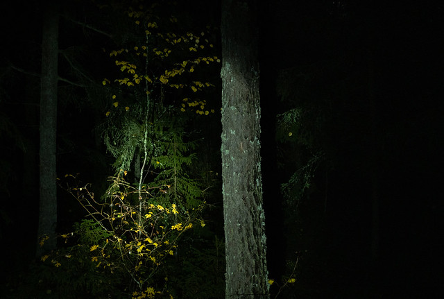 In a Forest (blinded by the light) (3)