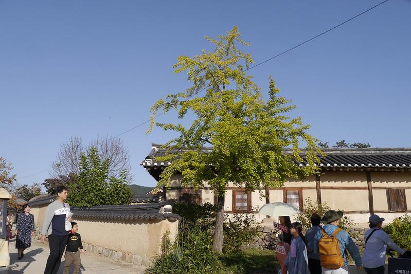 安东河回村