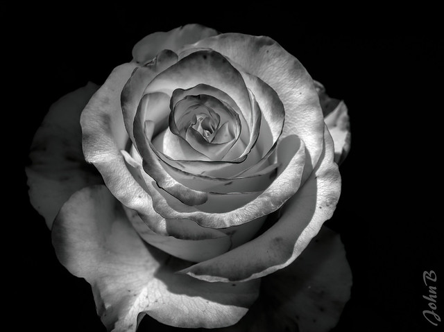 Rosy Black and White
