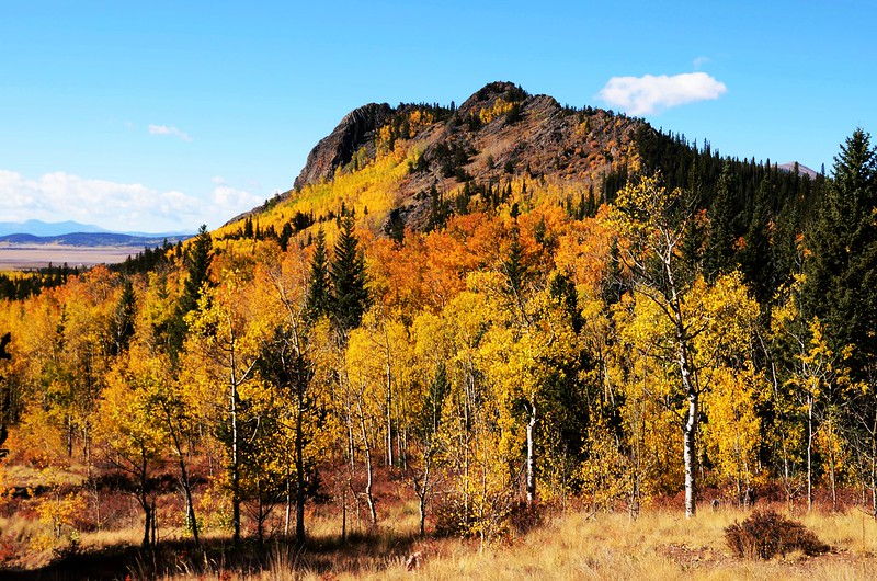 Jefferson Hill, Colorado Trail, Kenosha Pass (20)