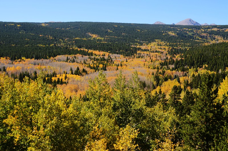 Fall Foliage in Peak to Peak Scenic Byway, Colorado (11)