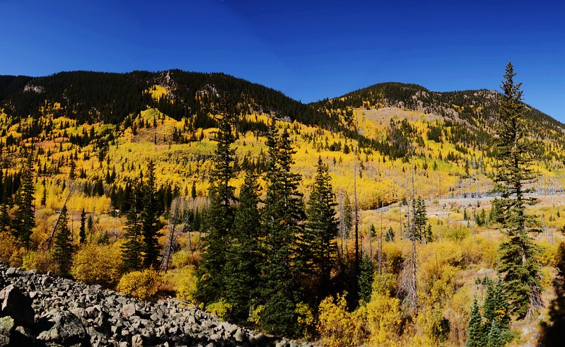 Fall Foliage in Kenosha Pass, Colorado (17)