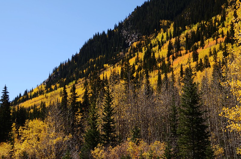 Fall Foliage in Kenosha Pass, Colorado (12)