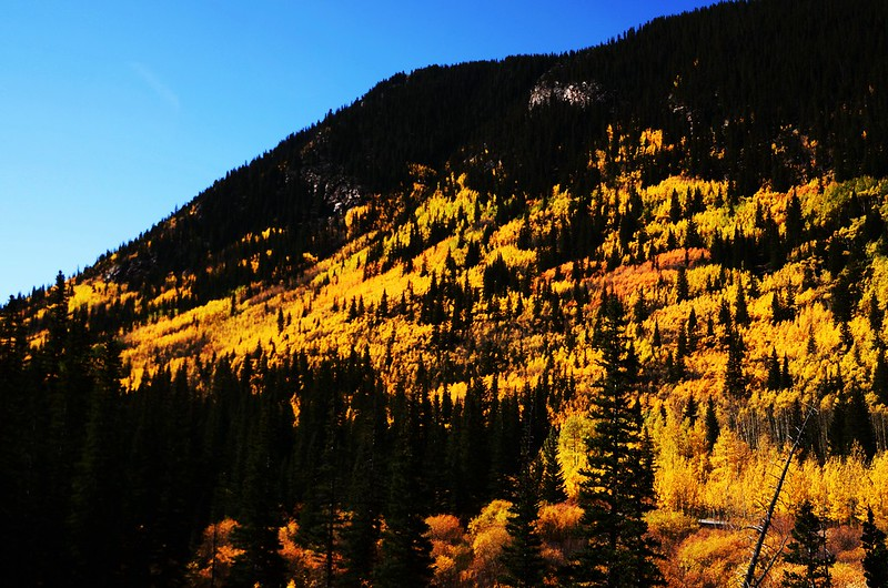 Fall Foliage in Kenosha Pass, Colorado (10)