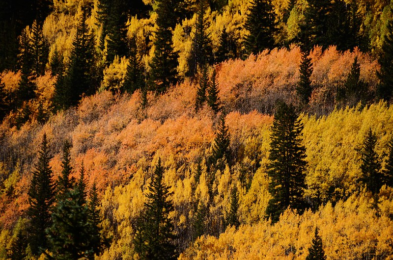 Fall Foliage in Kenosha Pass, Colorado (9)