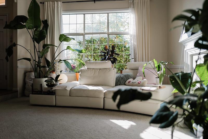 求推荐大的室内盆栽品种(半人到一人高那种),希望好看又容易活的,谢谢啦!-5楼
