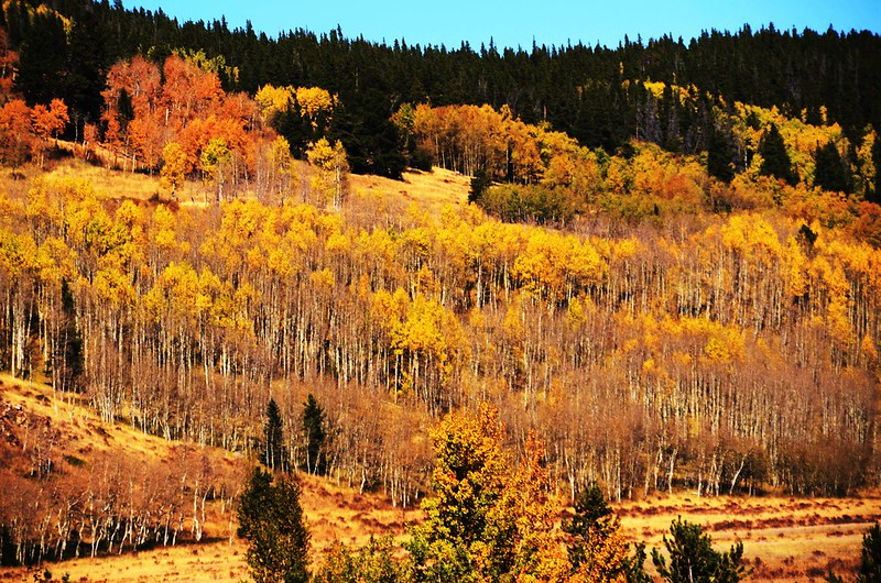 Fall Foliage in Rollins Pass, Colorado (3)