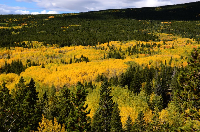 Fall Foliage in Peak to Peak Scenic Byway, Colorado (12)
