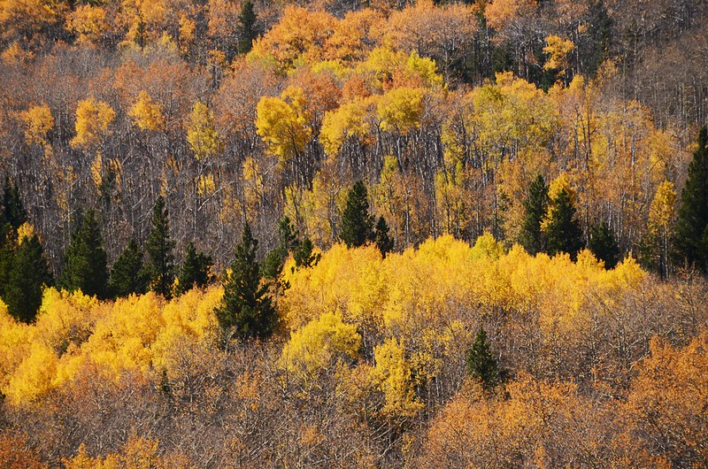Fall Foliage in Peak to Peak Scenic Byway, Colorado (10)