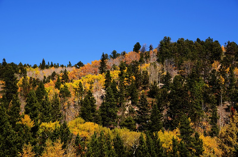 Fall Foliage in Peak to Peak Scenic Byway, Colorado (6)