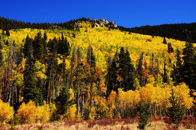 Fall Foliage in Keystone, Colorado