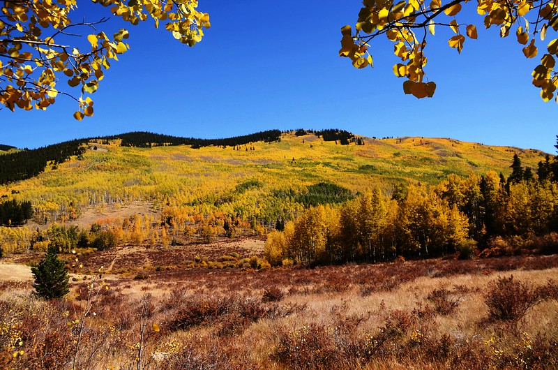 Fall Foliage in Kenosha Pass, Colorado (35)
