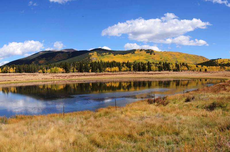 Fall Foliage in Kenosha Pass, Colorado (19)