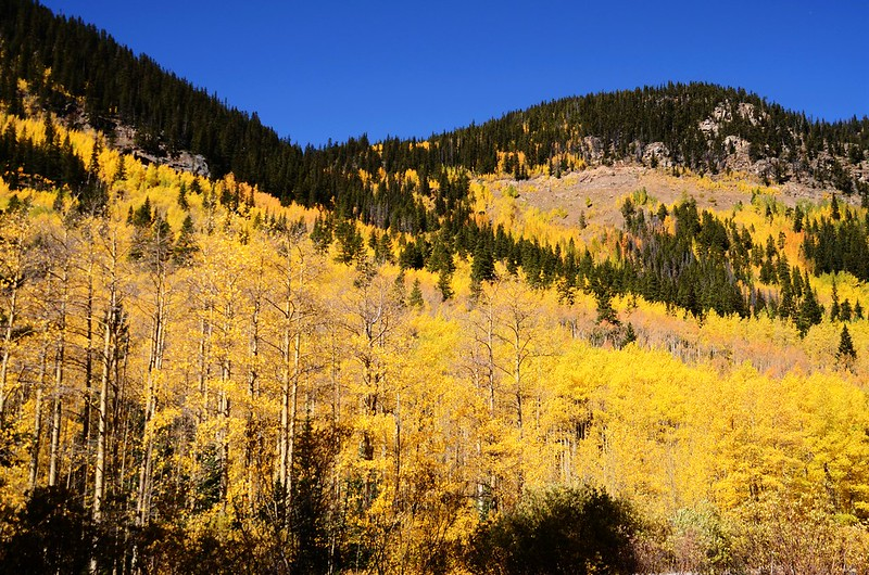 Fall Foliage in Kenosha Pass, Colorado (11)