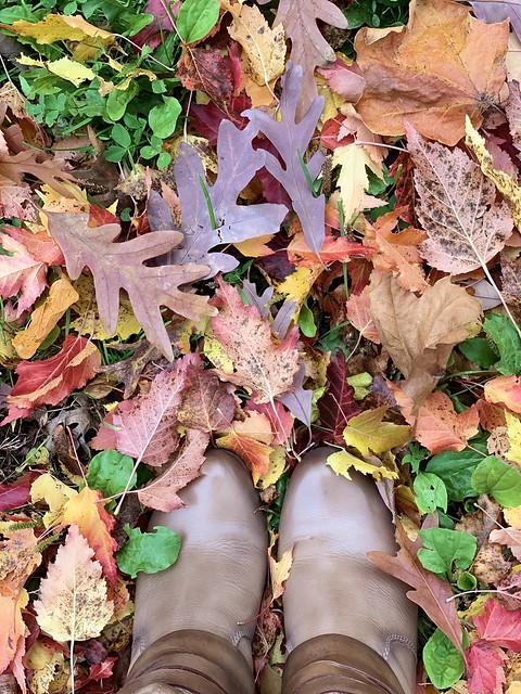 fall feels #fallfeels #fallcolors