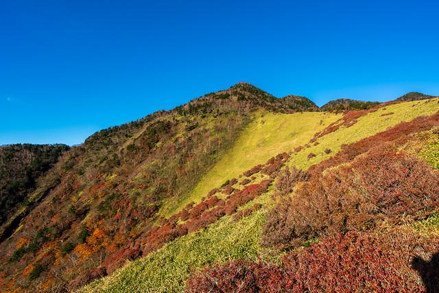笹尾根の斜面に紅葉が残る