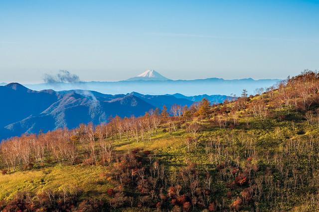 赤薙山へ向かう笹の斜面より・・・冠雪した富士山富士山