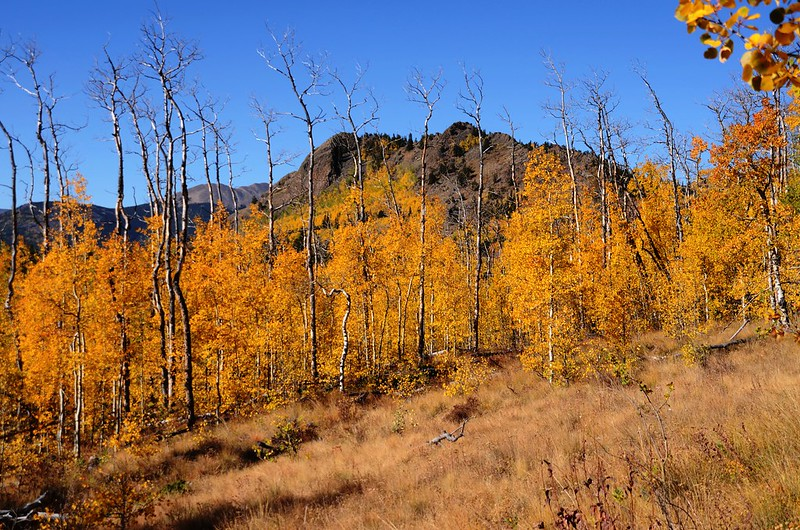 Jefferson Hill, Colorado Trail, Kenosha Pass (3)