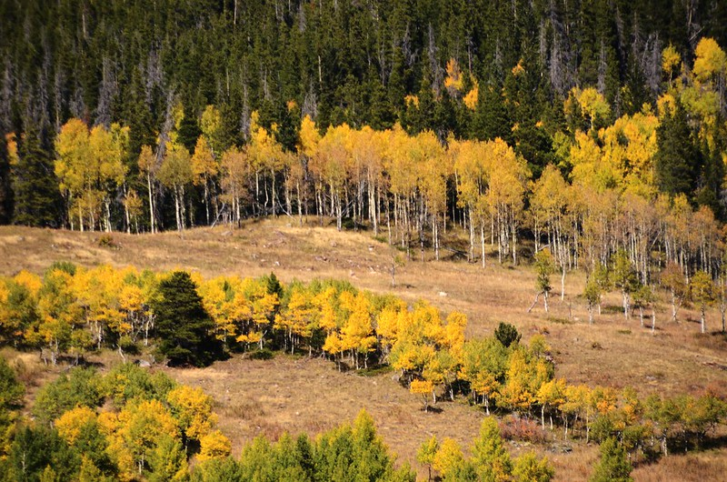 Fall Foliage in Rollins Pass, Colorado (2)