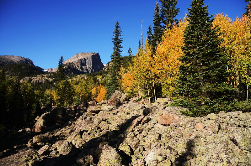Fall Foliage in Rocky Mountain National Park, Colorado