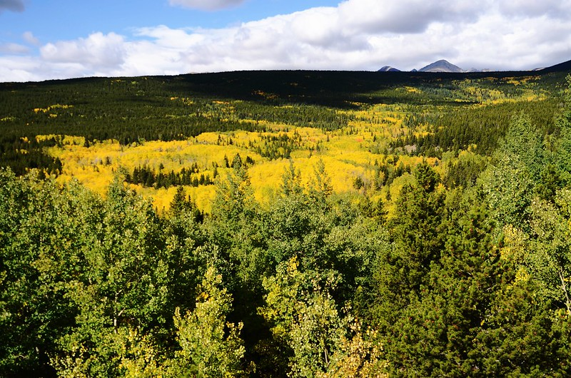 Fall Foliage in Peak to Peak Scenic Byway, Colorado (13)