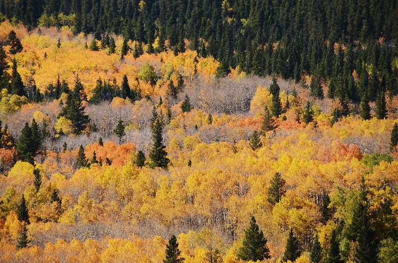 Fall Foliage in Peak to Peak Scenic Byway, Colorado (9)