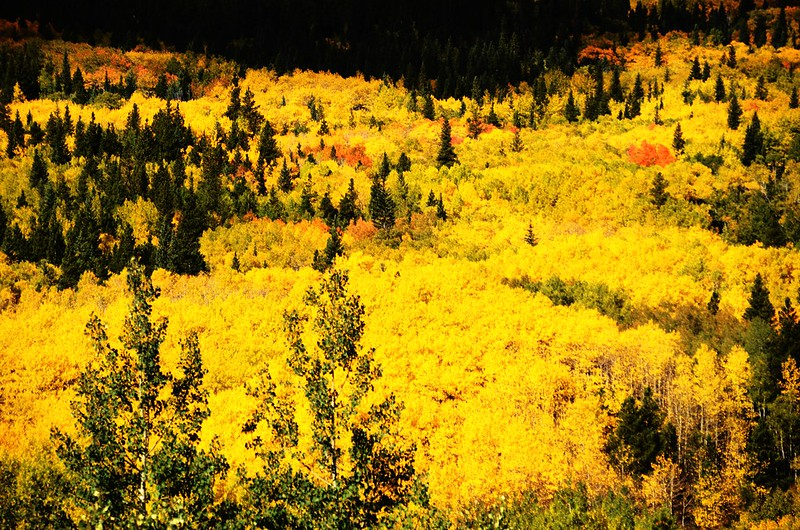 Fall Foliage in Peak to Peak Scenic Byway, Colorado (1)