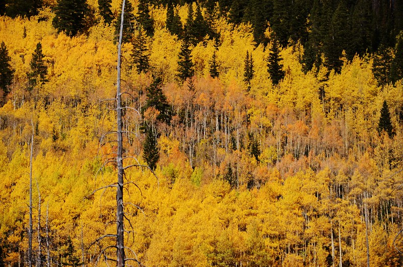 Fall Foliage in Kenosha Pass, Colorado (8)
