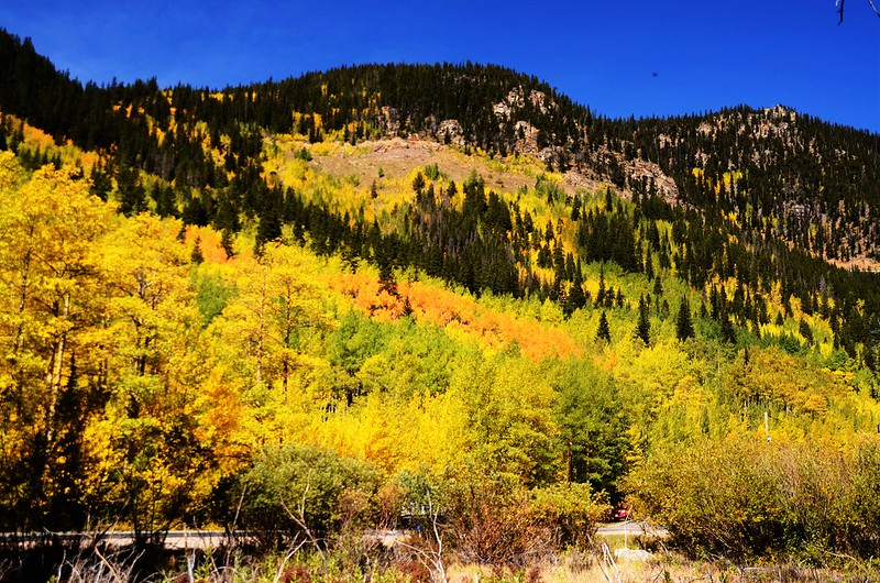 Fall Foliage in Kenosha Pass, Colorado (2)