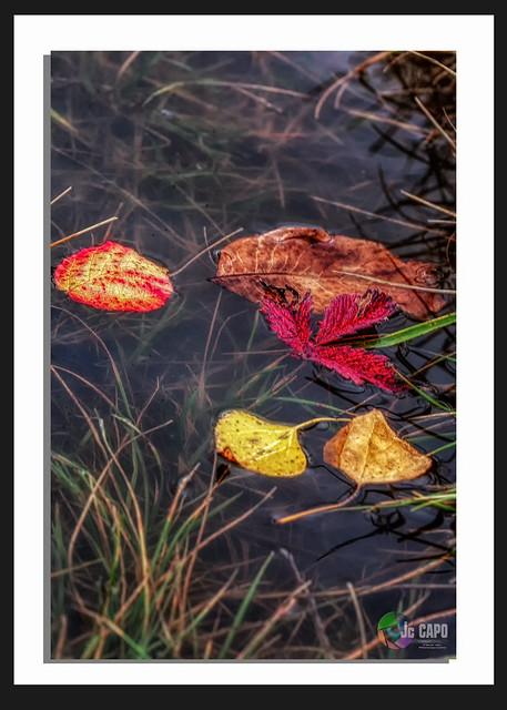 L'automne est une mutation, l'hiver une lutte, le printemps un épanouissement.