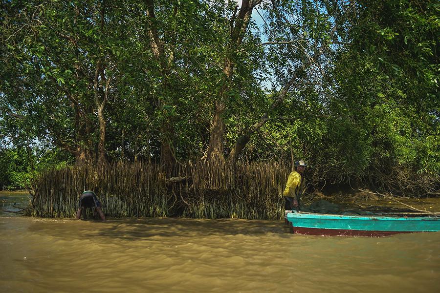 Mangrove-yang-tersisa-di-tepian-Sungai-Musi-yang-masih-menjadi-lokasi-pencarian-ikan-oleh-warga-Upang-Ceria.-Foto-Nopri-Ismi