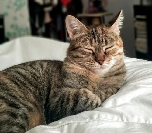 Rita, gatita parda con toques rubios dulzona y buena esterilizada, nacida en Enero´18 esterilizada, en adopción. Valencia. 48950948608_5036748ce4